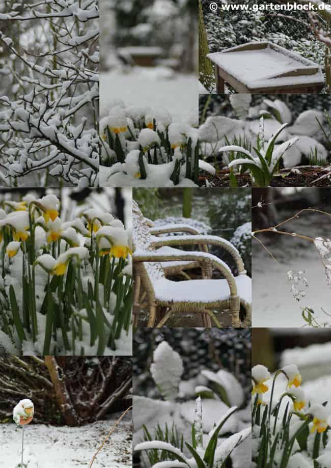 Ein ganz besonderer Wintergarten